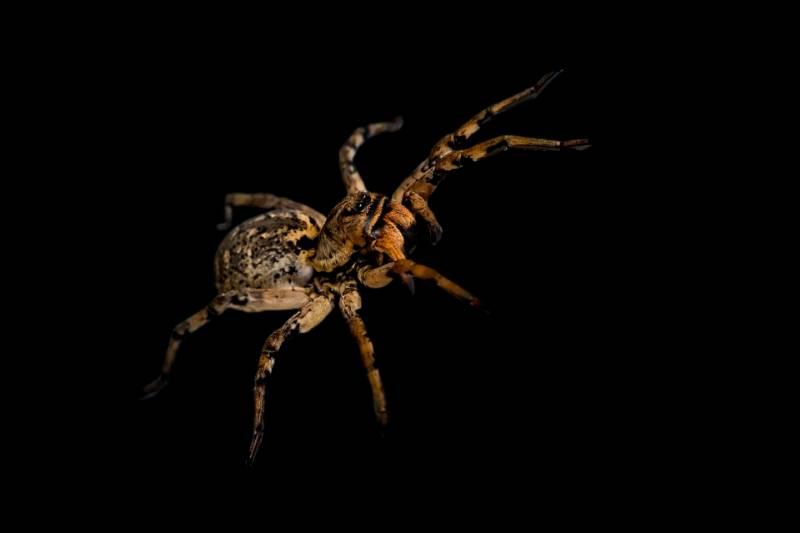 Paura dei ragni si tratta di Aracnofobia