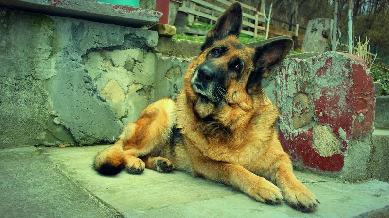 Le razze di cane più amate dagli italiani_